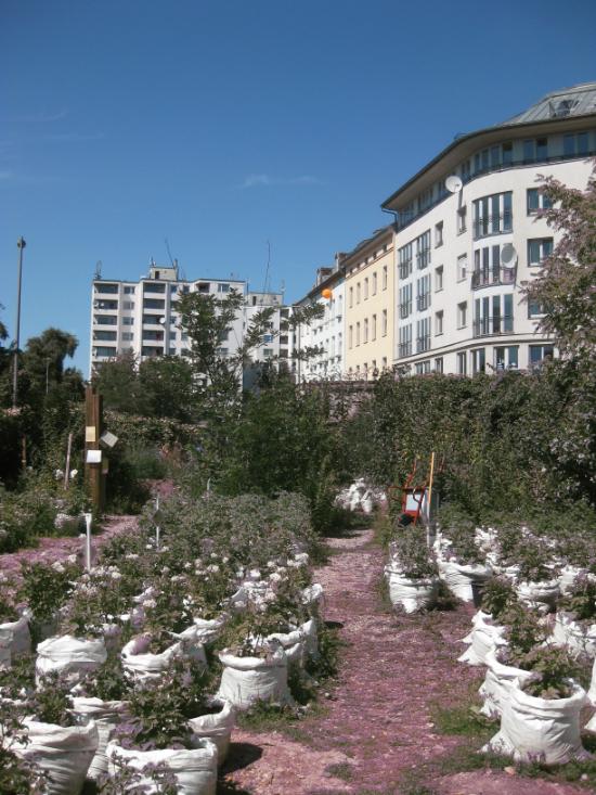 Prinzessinnengarten, eine mobile urbane Landwirtschaft in Berlin