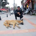 """""""How I miss Bucharest or The Journey of a Dog's Life"""""""