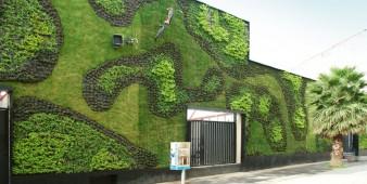 Grüne Fassaden – gesundes Stadtklima