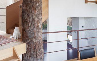 Das Baumhaus – neu interpretiert!