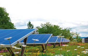 Fotovoltaik und Dachbegrünung – eine gute Kombination