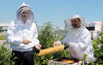 Austrotherm hilft Ökosystem – gedämmte Bienestöcke