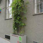 Pflegeleichte  Fassadenbegrünung