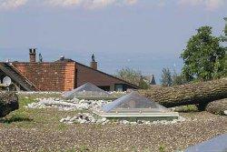 Bauder - Das Dachbiotop