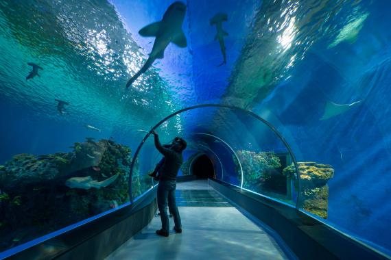 Aquarium Kopenhagen