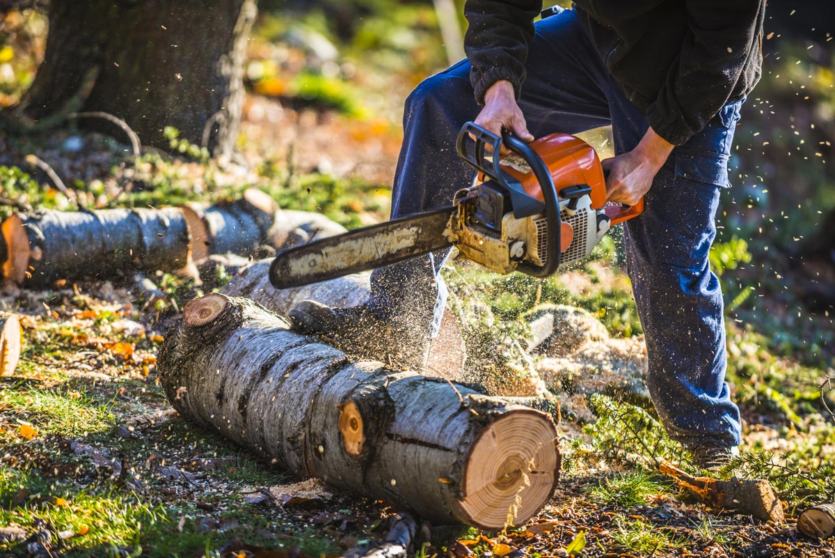 Baumrodung im Zuge von Bauarbeiten