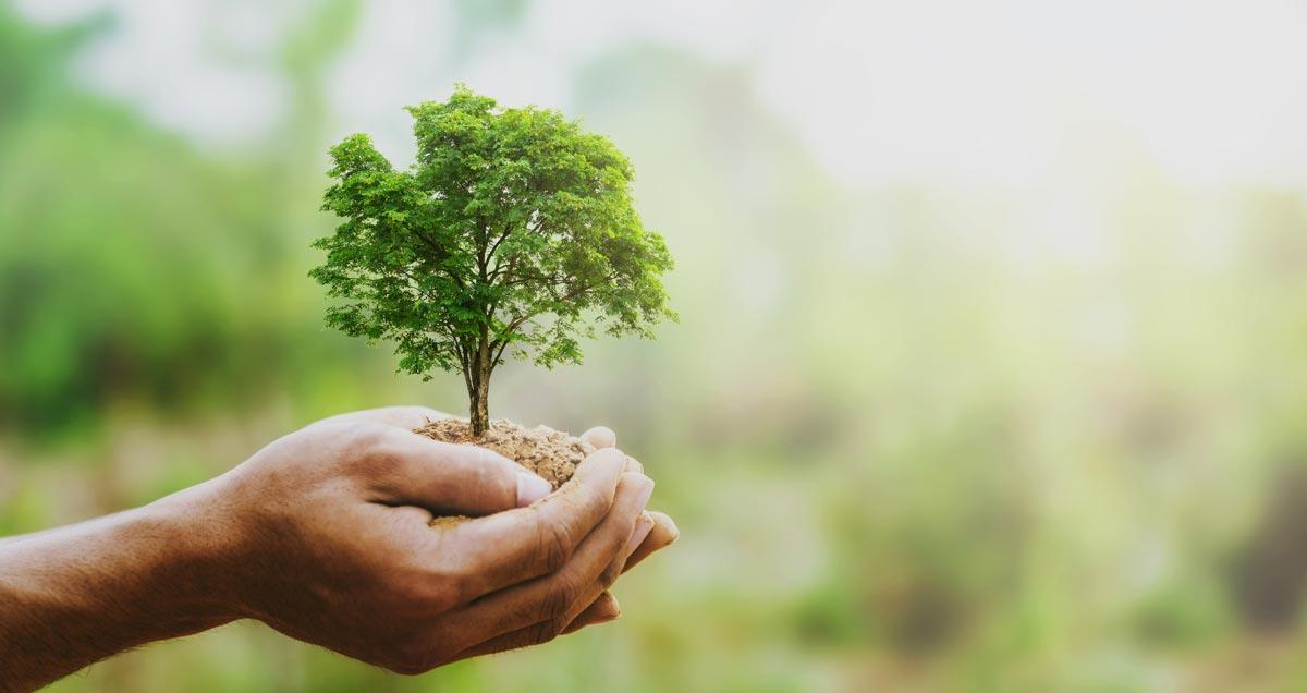 Was ist der gemeine Wert eines Baumes?
